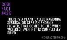 Cool-Fact-4317