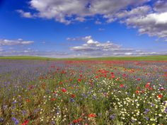 Poppy fields in Spain. Campos de Castilla en primavera, cielos infinitos.