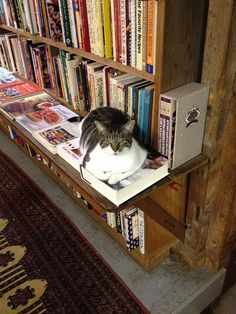 Bookstore cat is not pleased by wmankowski, via Flickr