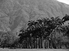 Photograph Parque del Este by Caracas ... on 500px