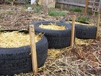 growing potato's in old tires. Easy because you just dump the tire when you want to harvest. Saw this first in the 70's from Mother Earth News.