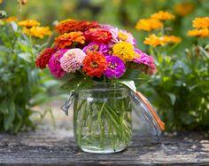 Growing Seeds, Growing Plants, Flower Farm, Flower Pots, Garden Beds, Garden Plants, Acid Loving Plants, Soil Layers, Soil Improvement