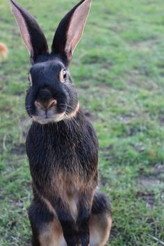 Make sure your rabbits housing is tall enough for them to stand fully on their back legs Enough Is Enough, Rabbits, Legs, Cool Stuff, Animals, Cool Things, Animais, Animales, Animaux