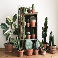 Best Indoor Plants, Cool Plants, Small Space Interior Design, Interior Design Living Room, House Of Night, Ecology Design, Flower Truck, Reclaimed Wood Projects, Mural Wall Art