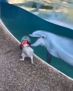 Cute Funny Dogs, Cute Funny Animals, Funny Pets, Cute Animal Videos, Cute Animal Pictures, Animal Antics, Cute Little Animals, Cute Creatures, Pet Birds