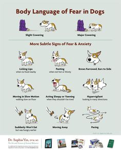 Body Language of Fear in Dogs