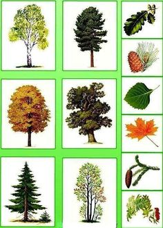 Naturvetenskap Autumn Activities For Kids, Math For Kids, Science For Kids, Science And Nature, Teaching Plants, Teaching Kids, Preschool Worksheets, Preschool Activities, Montessori Kindergarten