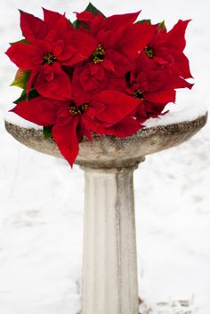 Birdbath with poinsettias