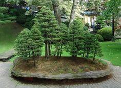 bonsai - Szukaj w Google