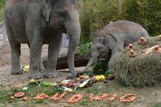 A festa de aniversário do elefante Ludwig.