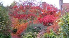 Acers on the garden at Standen Address: West Hoathly Road, East Grinstead, James Masters Sheffield Park, Hillside Garden, Famous Gardens, Going On Holiday, Beautiful Gardens, Masters, Things To Do, Home And Family, To Go