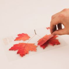 sticky notes that look like leaves!
