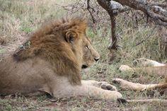 The King  www.worldairsafaris.net  your Safari Specialist in ARUSHA Travel Tours, Air Travel, Arusha, Safari, King, World, Videos, Animals, Airline Travel