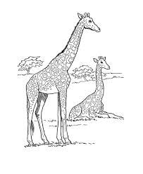 African Giraffe Coloring Page Free Printable Wild Animal Pages Featuring Sheets
