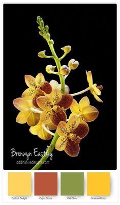 Stampin\' Up! Colour Inspiration from #addinktivedesigns  Climbing Orchid Bundle, Bronwyn Eastley, Independent Stampin\' Up! Demonstrator, Australia