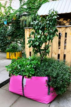Forget pots this season and fill your garden, yard or balcony with colourful planter bags. The Green Bags® are innovatively designed and super durable. Perfect for the urban gardener Condo Balcony, Garden Bags, Hanging Plants, Greenery, Pots, Fill, Planters, Forget, Bloom