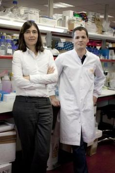 """First Gene Therapy Successful Against Aging-Associated Decline: Mouse Lifespan Extended Up to 24% With a Single Treatment  ScienceDaily (May 14, 2012) — A new study consisting of inducing cells to express telomerase, the enzyme which -- metaphorically -- slows down the biological clock -- was successful. The research provides a """"proof-of-principle"""" that this """"feasible and safe"""" approach can effectively """"improve health span."""""""
