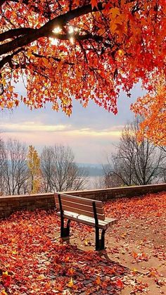 Location: Unknown The post Location: Unknown autumn scenery appeared first on Trendy. Beautiful World, Beautiful Places, Beautiful Pictures, Trees Beautiful, Beautiful Sunset, Fall Pictures, Nature Pictures, Landscape Photography, Nature Photography