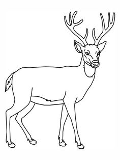 Deer Coloring Page Add Pipe Cleaner Antlers Recipes Party Deer Coloring Page