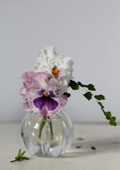 Ruffled Pansies in mauve and white.