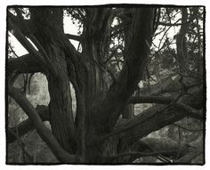Näyttelyt › Nobuyuki Kobayashi: Portrait of Nature–Myriads of God   Pohjoinen Valokuvakeskus   Northern Photographic Centre