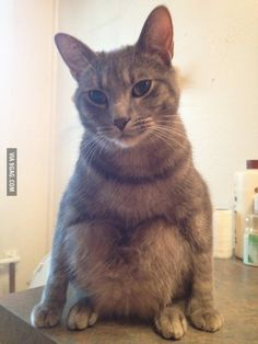 This cat sits weird