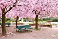 The Complete Guide to Blossom Season in Paris - The Glittering Unknown Country Cottage Living, French Country Cottage, Cherry Blossom Season, Bare Tree, Moving To Paris, Belle Villa, Garden Pictures, France, Cherry Tree