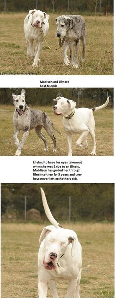 This is the best ever! It made my day/week/month/year! Blind dog...