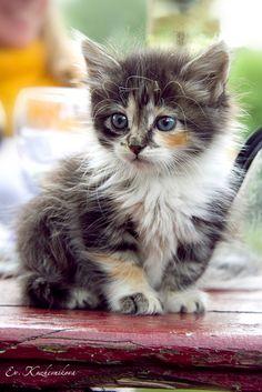 FACEBOOK: https://www.facebook.com/KittensLoveForever/ YOUTUBE CHANNEL: https://www.youtube.com/user/TheFederic777 BLOG: http://look-how-cute-kittens-2.blogspot.com/ BLOG: http://make-dogs-be-happy.blogspot.com/