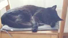 Väsynyt kissa. 19 vuotta :)