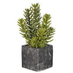 Artificial Senecio Desk Top Plant in Planter
