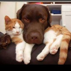 Head rest #funnydogs #dogsfunny #dogs