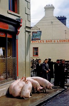 vintage everyday: Pictures of Ireland in 1954
