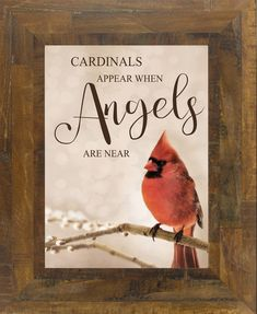 Cardinals Appear When Angels are Near – Summer Snow Art Cardinal Birds Meaning, Bird Meaning, Estrella Cardinal, Cardinal Tattoos, Bird Tattoos, Missing You Quotes For Him, Snow In Summer, Bird Quotes, Animals
