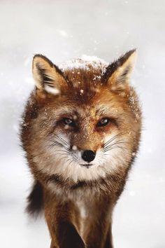 Land of the Animals — lsleofskye: Wild eyes