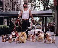 NYC Dogwalking - This is what Brian does. But I know that's not him because all of his tank tops are pink.  He works in Chelsea.
