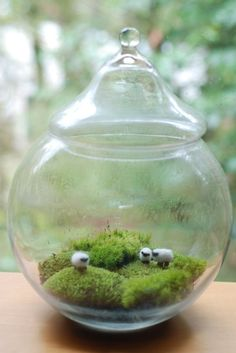 Do you have any ideas about terrarium? To make the Terrarium there's not sure rule and size.