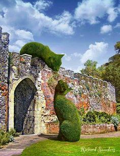 Topiary in Hertfordshire, UK; photo by Richard Saunders
