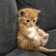 awww - your daily dose of funny cats - cute kittens - pet memes - pets in clothes - kitty breeds - sweet animal pictures - perfect photos for cat moms Baby Animals Super Cute, Cute Baby Cats, Cute Little Animals, Cute Cats And Kittens, Cute Funny Animals, Kittens Cutest, Funny Cats, Pics Of Kittens, Orange Tabby Kittens