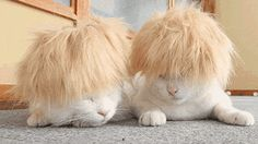Cats with wigs. yeah.