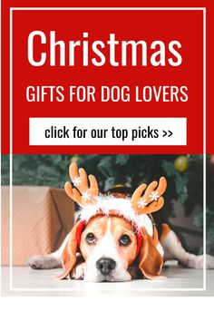 Explore our guide to the top picks of christmas gifts for dog lovers. We have something for everyone so click through to read more. Whether your loved ones enjoy books, gadgets, subscription boxes or just christmas gifts for a dog, we have you covered. #christmasgiftsfordoglovers Dog Christmas Gifts, Oils For Dogs, Dad Gifts, Dog Id Tags, Dog Products, Diy Dog, Gifts For Pet Lovers, Cool Pets, Subscription Boxes