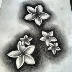 this plumeria drawing would make a nice tattoo nice shading tattoos pinterest hawaii. Black Bedroom Furniture Sets. Home Design Ideas