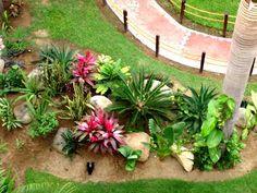 Tropical Garden Ideas bromeliad garden bromeliads in australia bromeliads xiii Tropical Landscaping