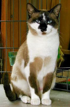 cat ~ beautiful markings