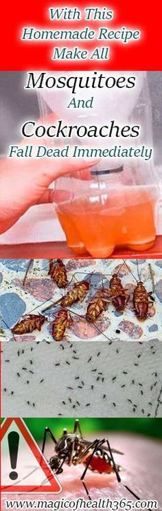 WITH THIS HOMEMADE RECIPE MAKE ALL MOSQUITOES AND COCKROACHES FALL DEAD IMMEDIATELY