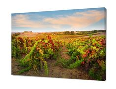 California Wine Country Photo Napa Valley Art Autumn Print Gold Blue Vineyard Rooms Home Decorcanvas