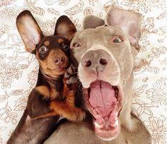 Harlow e Sage são dois cães inseparáveis que um dono criativo. Veja o resultado