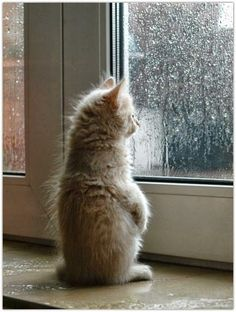 watching the rain - Fashion Chalet