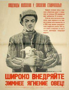 Schütze — «Широко внедряйте зимнее ягнение овец! 1957» на Яндекс.Фотках
