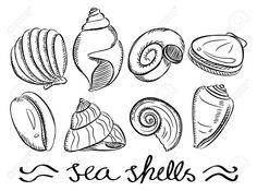 Afbeeldingsresultaat voor schelpen tekenen